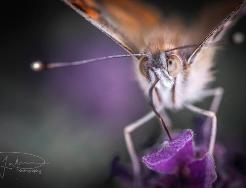 A Peek Into the World of Insects